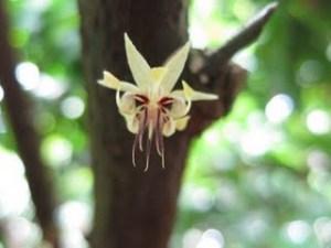 rawcacaoflower