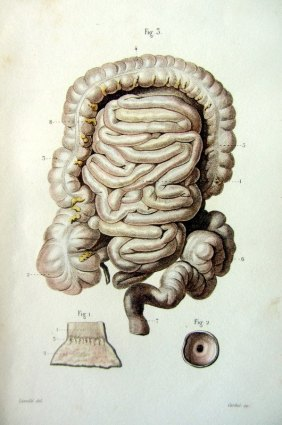 1852 lithograph of the gut
