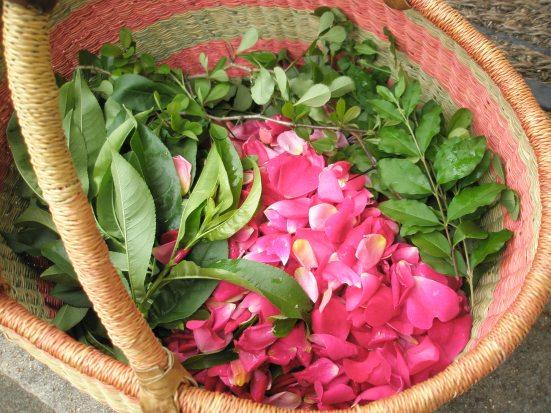 Spring herb harvest...