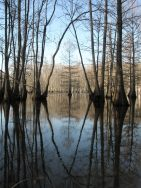 Swamp symmeTREE