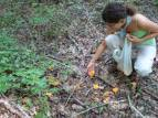 Chanterelle hunting...
