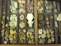 My friend Robin's collection of nature treasure...