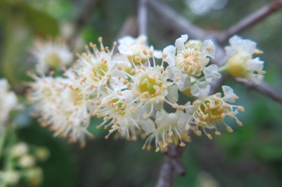 islay flower