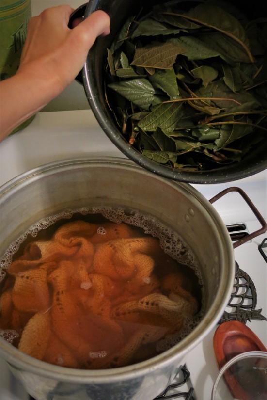 loquat fresh dye bath