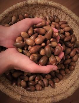 acorn 2019